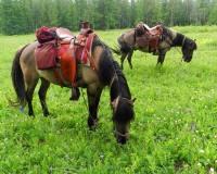 Stone_Horse_Saddles_1