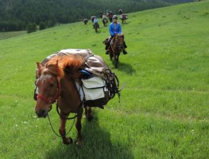 Horse riding Mongolia, Mongolia horse riding, Mongolia horseback riding, mongolia horse tours, Mongolia horse trekking, Mongolia horse travelA packhorse with Stone Horse Expeditions, Mongolia, of the Mongolian Horse Breed