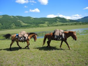 Horse trek camping in Mongolia, made possible by pack horses on horse riding tours in Gorkhi Terelj National Park and the Khentii Mountains in Mongolia