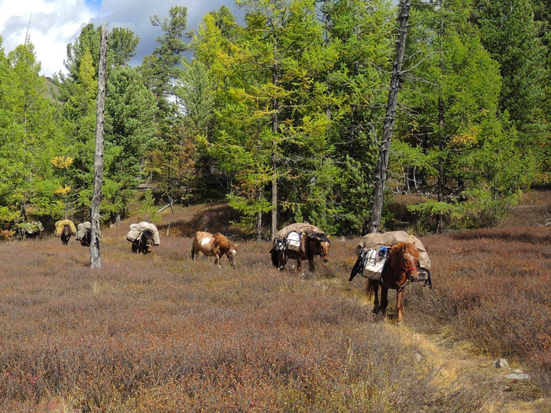 horse riding in Mongolia, responsible travel in Mongolia, conservation holiday, horse trekking in Mongolia, Khentii Mountains in Mongolia,