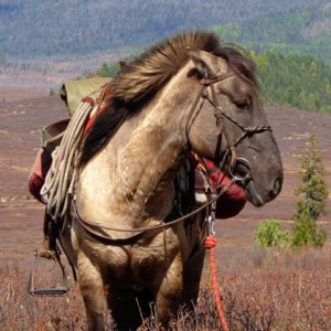 horse trekking Mongolia, riding tours, horseback riding holidays