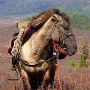 horse trekking Mongolia, riding tours, horseback riding holidays