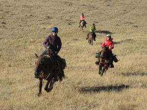 Stone Horse rides are a great experience in Mongolia