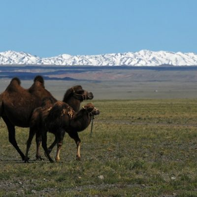 Gobi Gurvan Saikhan National Park, Mongolia