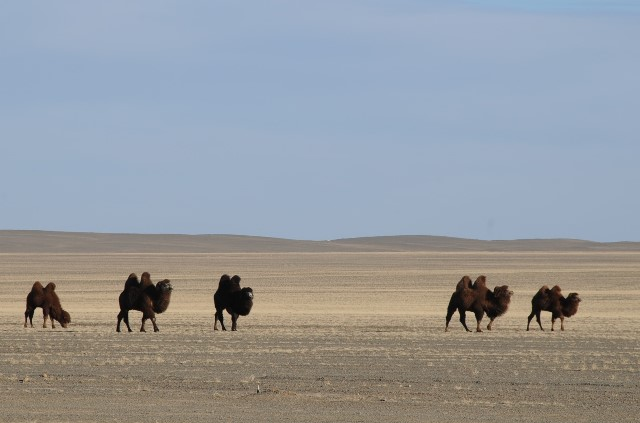 Gobi Desert Mongolia, Winter Travel Destination