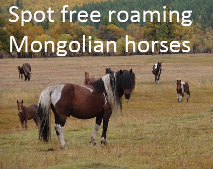 Mongolian horses, Horse riding Mongolia_1