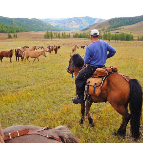 Byambaa watching a herd