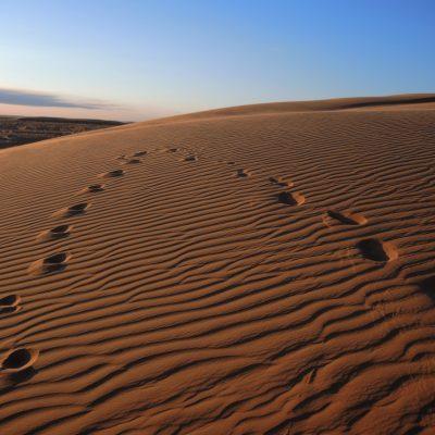 Sand dunes, gobi desert, Moltsog Els, Mongolia