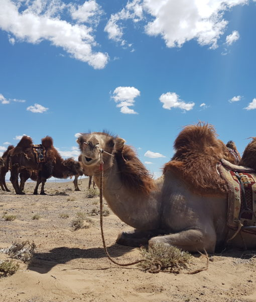 Gobi Crossing, Mongolia