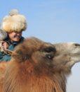 Camel Rider, Camel Festival