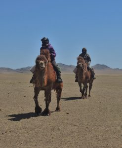 Wintre Camel Trekking in the Gobi