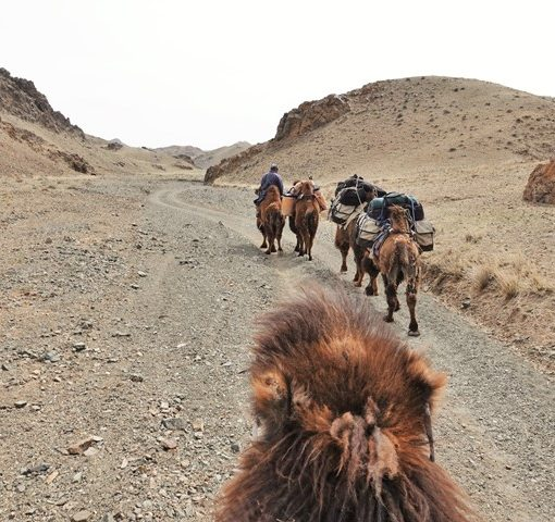 Winter Camel Trekking in the Gobi, Mongolia