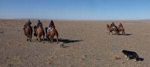Slow Travel in Mongolia, Camel Trekking, Mongolian Gobi, Stone Horse Expeditions