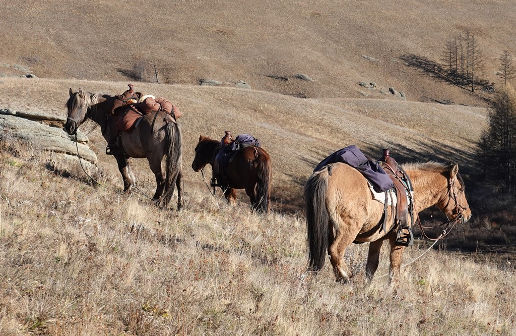 Trail Horses, Mongolia, Stone Horse Expeditions, Stone Horse Saddles