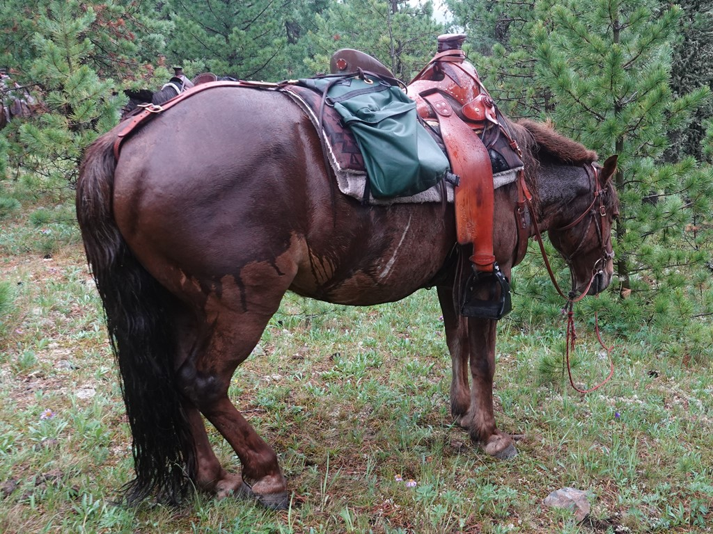 In the Saddle in Mongolia with Stone Horse Expeditions
