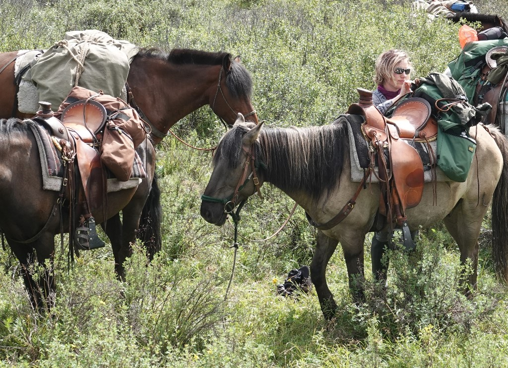 Saddle Horses of Stone Horse Expeditions, Mongolia Trails, Stone Horse Saddles