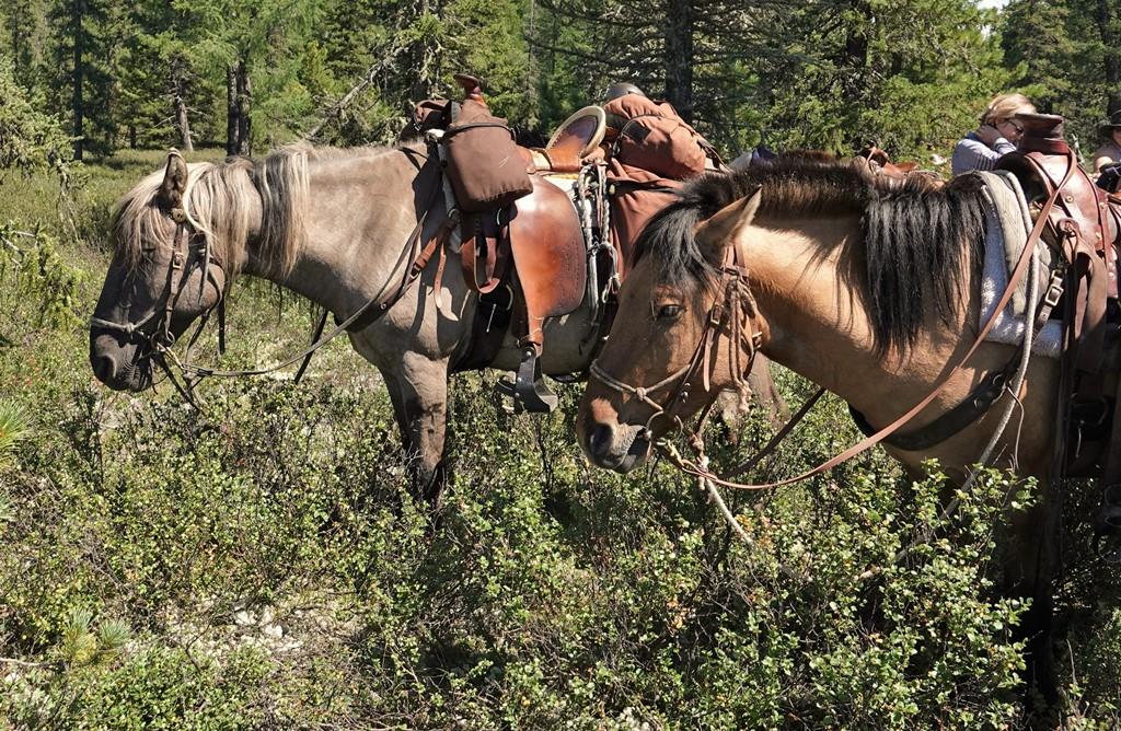 Saddles for Mongolian Trail Horses