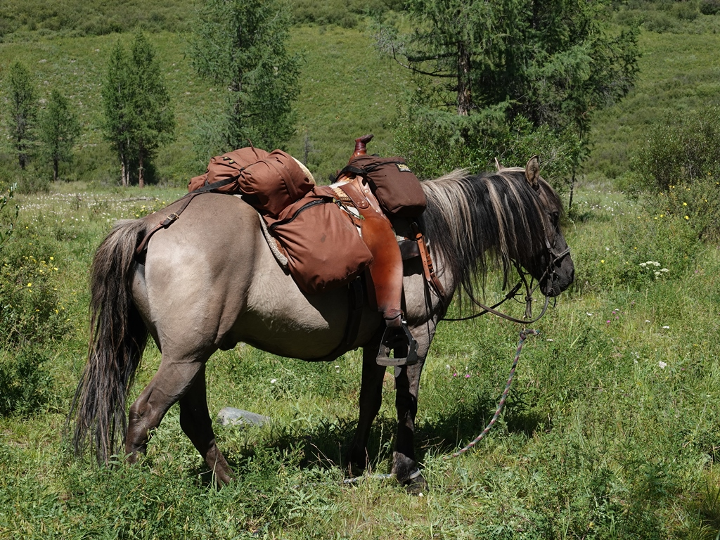 Expedition Horse, Mongolia, Saddle Horse, Trail Riding, Trekking
