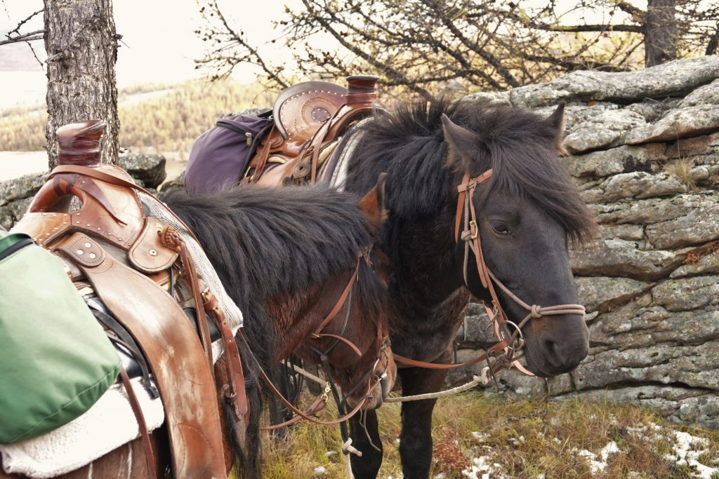 Horses, the Dawn of Arts and Forgotten Dreams, Trail Riidng in Mongolia, Stone Horse Expeditions