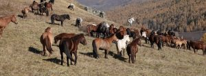Horses, the Dawn of Arts and Forgotten Dreams, Horseback Journeys in Mongolia