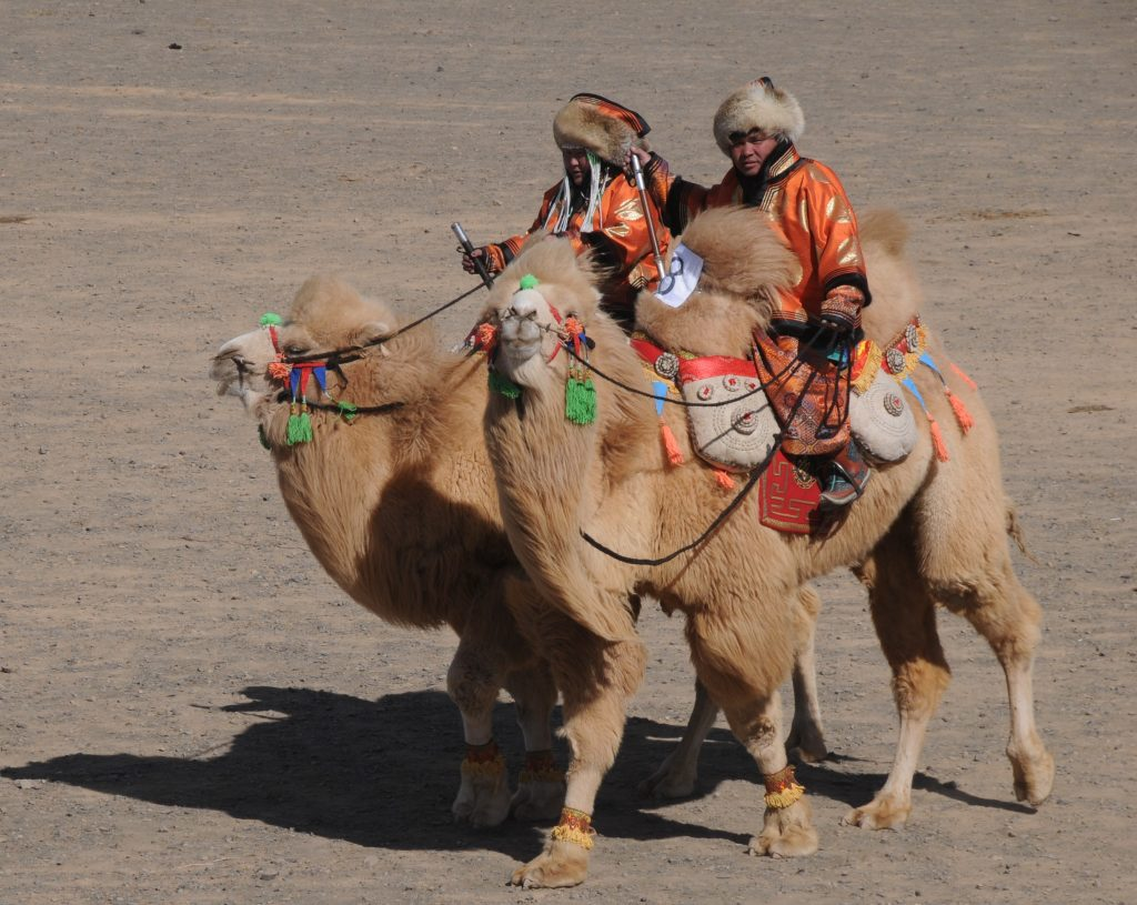 Festivals in Mongolia - Celebrations of Nomadic Traditions, Camel Festival South Gobi