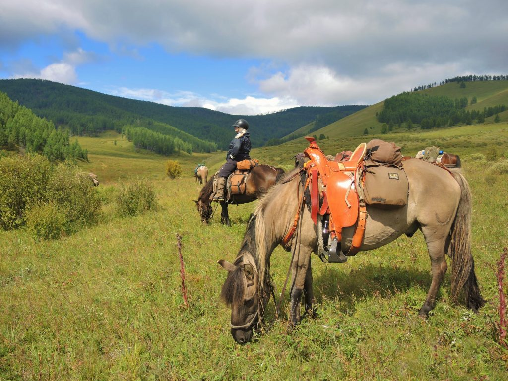 Mongolian horses for trail riding, horse trekking in Mongolia