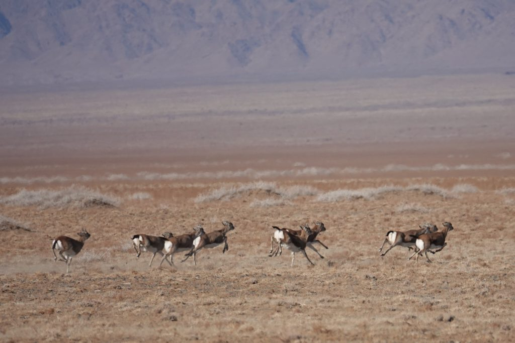 Wintre Camping in Mongolia's Gobi, Stone Horse Expeditions