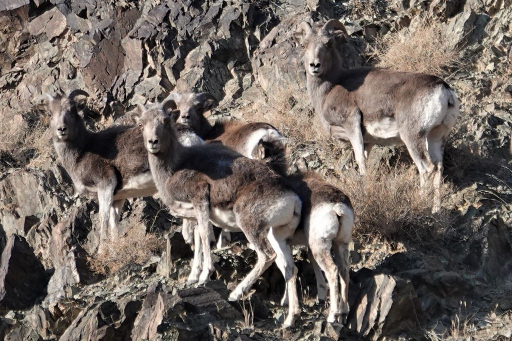 Wildlife and Landscapes of the Desert Steppe, Stone Horse Expeditions