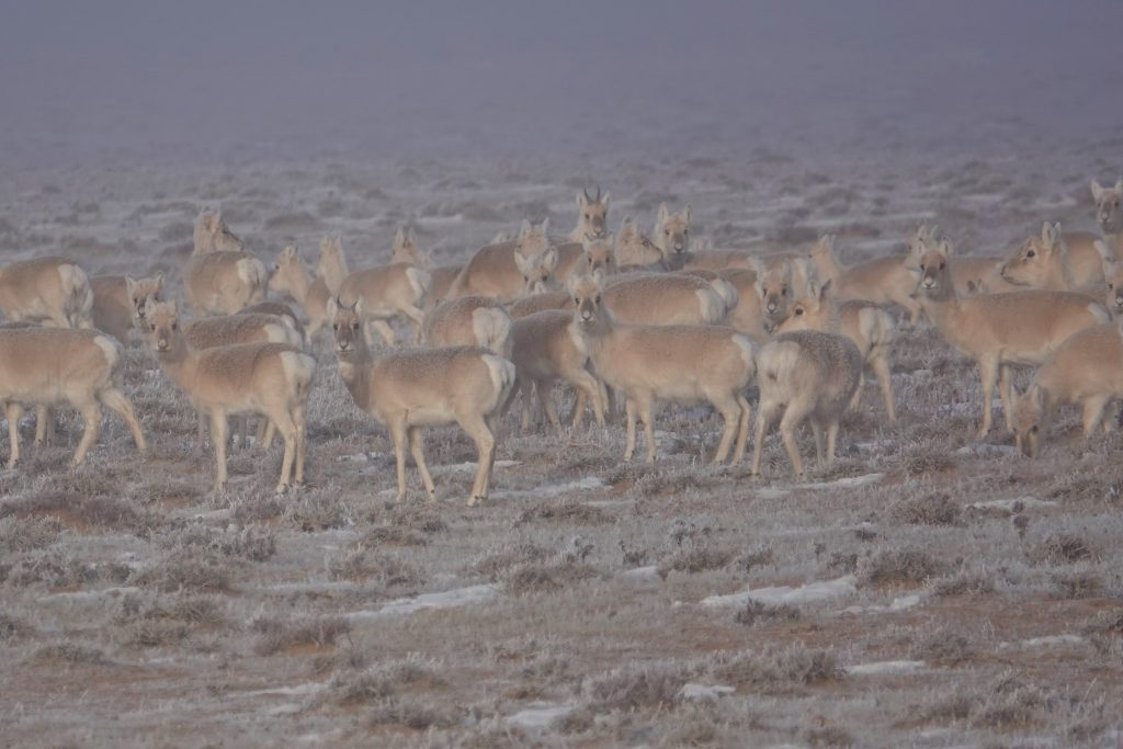 Wildlife and Landscapes of the Desert Steppe, Stone Horse Expeditions, Mongolia
