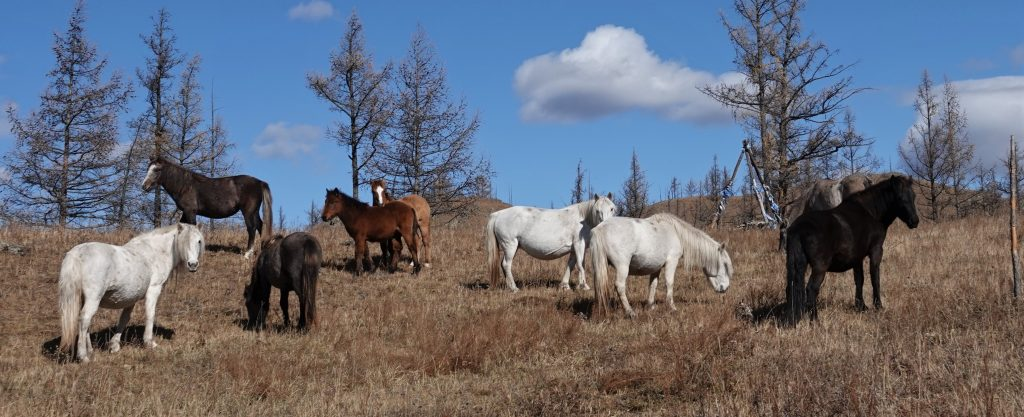 Build Your Riding Confidence in Mongolia, Stone Horse Expeditions, Horseback Riding in Mongolia