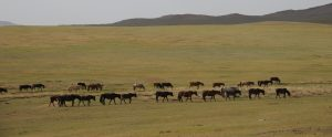 Mongolia's Ancient Capital, Kharkhorin, Stone Horse Expeditions,